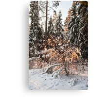 Forest in winter Canvas Print