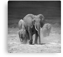 Elephants at Amboseli, Kenya Canvas Print