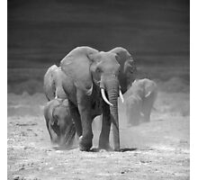 Elephants at Amboseli, Kenya Photographic Print
