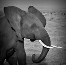 Elephant calf by javarman