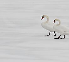 Swans on Frozen, Snowed Over Water by Gerda Grice