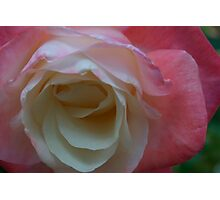 Pink, white II Photographic Print