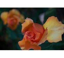 Orange, gold, white Photographic Print