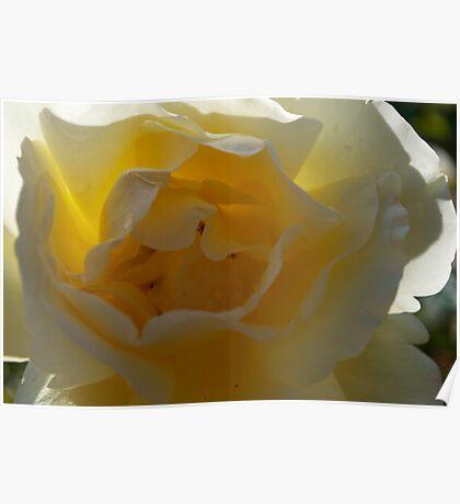 Yellow, white Poster