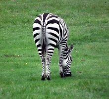 Zebras behind by Abigail Langridge