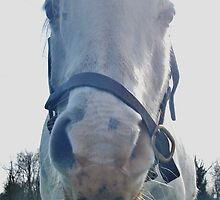 Face-on Horse smirking at camera! by Luketxx