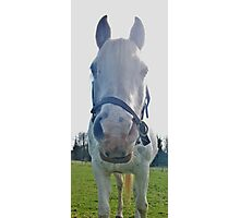 Face-on Horse smirking at camera! Photographic Print
