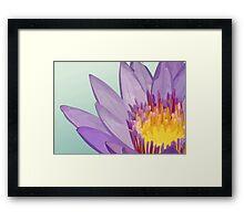 Flower of lotus Framed Print