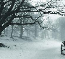 Black Tree by Gary Finnigan