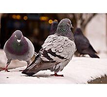 Rock Pigeon Photographic Print