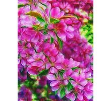 Spring Dreams Photographic Print