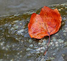 Autumn Leaf by Leon Heyns