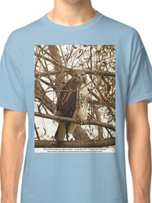 Red-Tailed Hawk as wise as Owl Classic T-Shirt