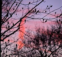 Bye to the Day by Abbi Kenny