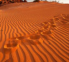 Footprints in the Sand by Mieke Boynton