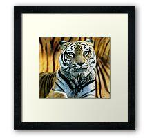 Portrait of a beautiful Tiger Framed Print