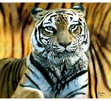 Portrait of a beautiful Tiger Photographic Print
