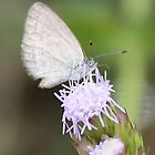 Beautiful little butterfly by cathywillett
