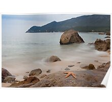 Starfish resting on a rock at peaceful seascape Poster