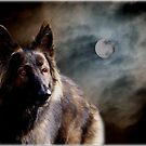 W(h)ere wolf ? - There wolf !  by Bine