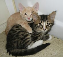 Buz & Boots kitten brothers by Geode