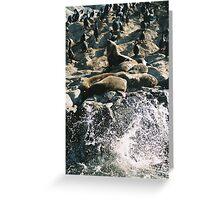 Ushuaia wildlife and sea animals Greeting Card