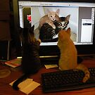 Buz & Boots kitten brothers watching themselves on TV by Geode