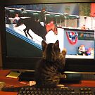 Boots watching Spruce Meadows equestrian event on TV by Geode