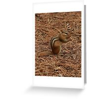 Chipmunk at our Campsite Greeting Card