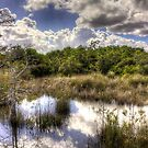 Hammock — Florida Everglades by Bill Wetmore