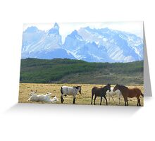 Chilean horses pasturing with Torres Del Paine mountainscape in the background Greeting Card