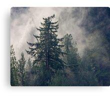 Fog Sun Trees Canvas Print