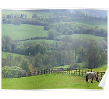 Horse grazing in pasture, Cotswalds, England Poster