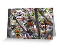 Red robin, autumn leaves in England Greeting Card