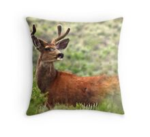 Velvet Stag Throw Pillow