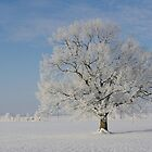 Snow Tree by Aviana