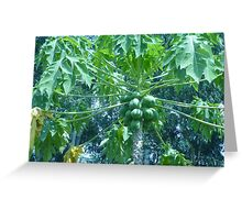 Clusters of strange fruit haning from a tree Greeting Card