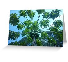 Fruit at top of towering tree Greeting Card