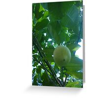 Beautiful lemon in a tree Greeting Card