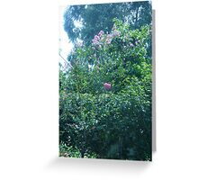 Pink tree blossoms kissing the sky Greeting Card