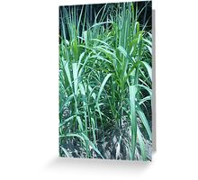 Rows of sugar cane in the sun Greeting Card