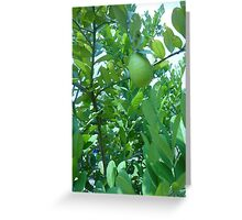 Strange exotic fruit in a tree Greeting Card