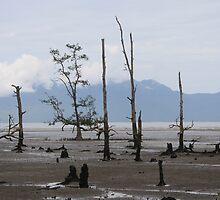 Dying Mangroves, Bako National Park, Sarawak, Borneo by kabykaby