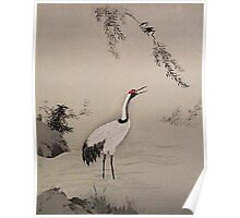 crane in water Poster