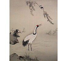 crane in water Photographic Print