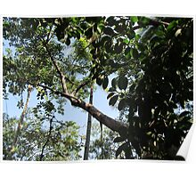 The huge rubber tree at the Isla Cuale - El Gomero Grandote, Puerto Vallarta, Mexico Poster
