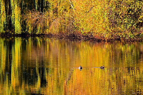 Autumn Reflections by Colin Metcalf