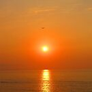 A Bird in the setting Sun - Un pjaro en el Sol, Puerto Vallarta, Mexico by PtoVallartaMex