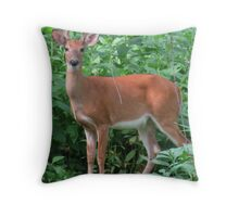 Young Red Buck Throw Pillow