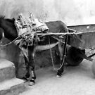 Little Donkey by Victoria Kidgell